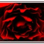 L'Âme de la Rose… La Reine des Fleurs. Ferri