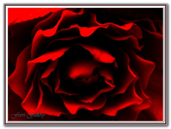 L'Âme de la Rose… La Reine des Fleures. Ferri