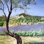 Le lavandin et l'amandier - Sur les routes de Provence.. Gérard Pichet