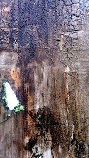 Gros plan d'une partie du travail: écorce bois en cours…. Dysabo