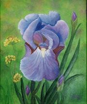 L'Iris bleu violet de nos jardins.
