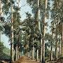 L'allée des Eucalyptus - Cannes - île Sainte Marguerite. Gérard Pichet