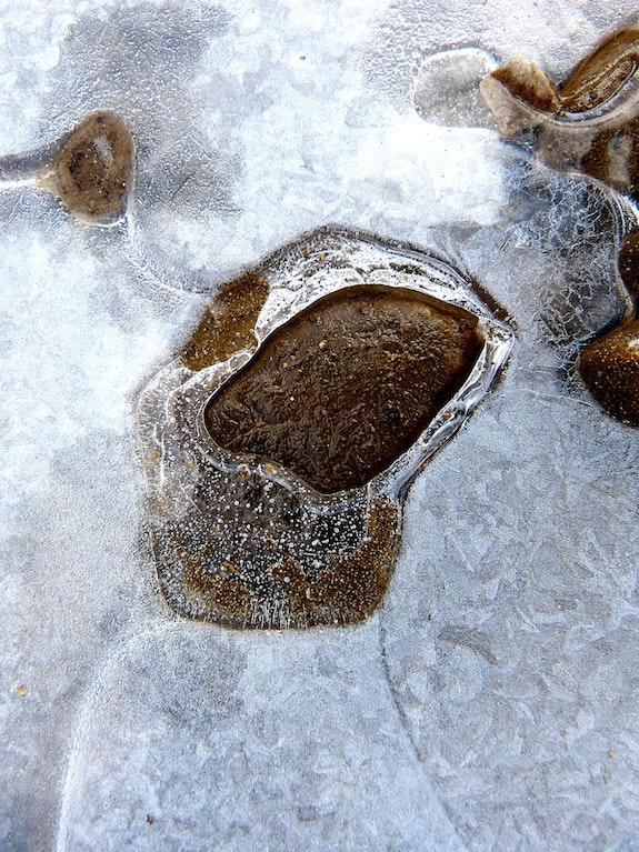 Printemps glacé. Claire Tresse Claire Tresse