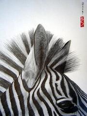 Tete de zebre, details…. Eric Stavros