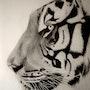 Tete de tigre, details. Eric Stavros