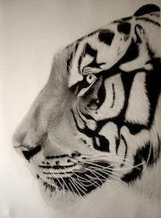 Tete de tigre, details.