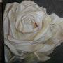 Essence de rose. Joseline Nectoux
