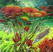 Wildlife under Water.