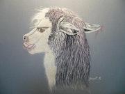 L'Alpaga. Michel. Gouyet