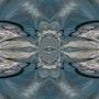 Migration. Coriandre