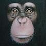 Chimpanzé. Jean Esain