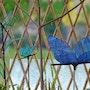 Libellules et Papillon. Martine Dugue