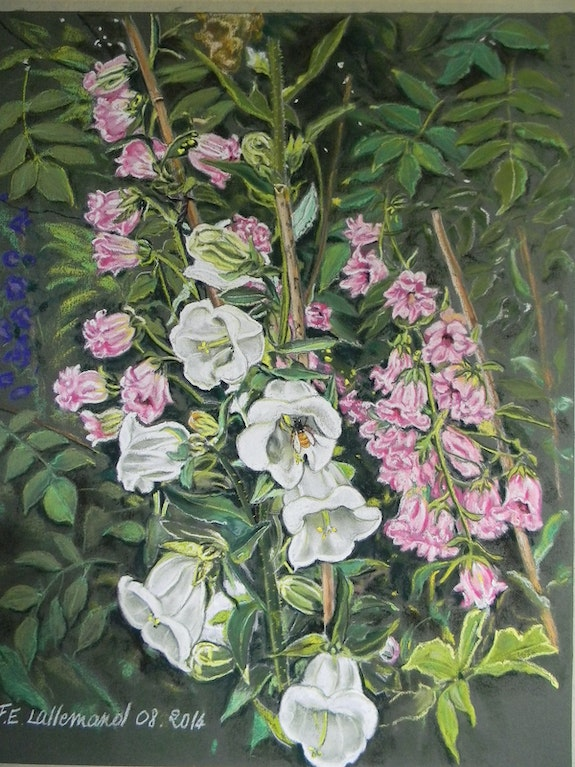 Campanules blanches et roses de Giverny. Françoise-Elisabeth Lallemand Françoise-Elisabeth Lallemand