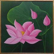 Lotus de l'Aube.