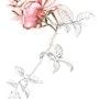 Rose. Mechile Hb