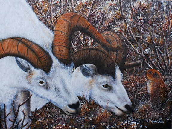 What Are You Looking At? /A couple of dall sheep grazing near an arctic squirrel.. Mike Ross Mike Ross Original Oils