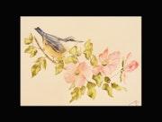 Aquarelle et son oiseaux aux fleurs. Perlimpinperles