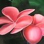 Fleurs roses tropicales. Jigée