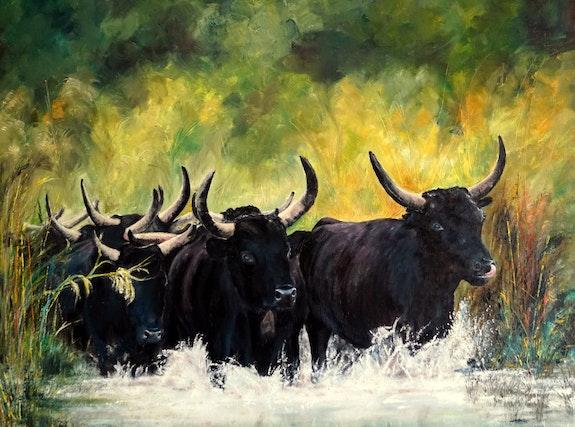 Les taureaux camarguais. B. Sannier Bernard Sannier