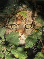 Chat à l'affût.
