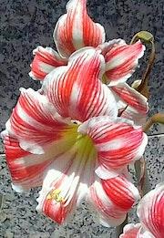 Una flor.