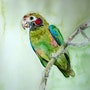 Aquarelle le petit perroquet ou pionus. Yokozaza