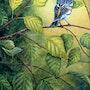 Paruline-à-croupion-jaune. Robert M. Deschênes