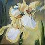 Les iris jaunes. Marie Colin