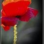 Royal… «Rouge». Martine Dugue