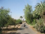 Palmeraie de Marrakech le maitre et l'ane à l'ouvrage.