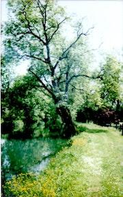 Rivière fleur et grand arbre. Frank21