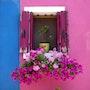 Fenêtre fleurie de Burano. Solena432