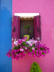 Fenêtre fleurie de Burano.