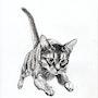 Le saut du chat. 33Domy