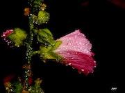 Je sais bien que la Pluie….