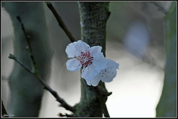 Fleur de Source…. Ferri Ferri