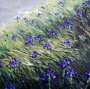Les iris dans le vallon d'Aule.