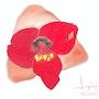 Hibiscus con sus estambres en flor. Jean-Jacques Copetta