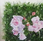Les roses au matin.