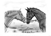 Zwei Pferde.