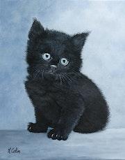 Petit chat noir.