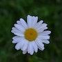 Une Fleur…. Sharareh Jafarinejad Soumeh Sarae