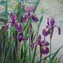 Iris. Jaeger N.