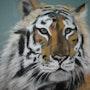 Tigre. Joelle Bouriel