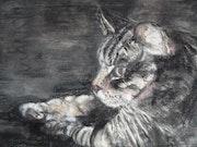 Le chat d'Amandine.