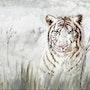 Tigre blanc. Marie-Noel Toulon