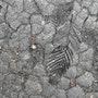 Sans vie de la nouvelle Galerie d'oeuvres intitulée » Renait Cendres». France Mannaioni