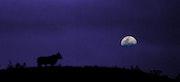 Tête à tête avec la lune.