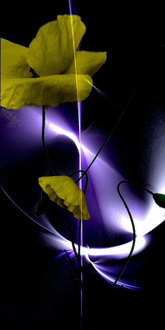 Dis ! Tu m'aimes en jaune ?. Pawel Reklewski / Le Sage Coyote Le Sage Coyote