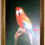 Perroquet. Abir Hassouna